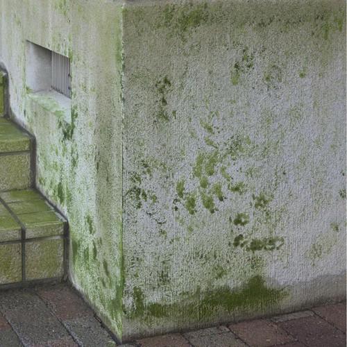 エクステリア・藻、コケ、カビ落し